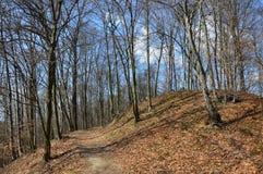 Лес около городка Lukavac стоковые фото
