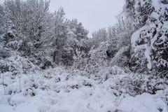 Лес Snowy во французской сельской местности во время сезона/зимы рождества стоковые изображения rf