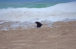 Летание кукушкы над песком стоковое фото