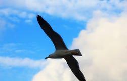 Летание чайки на море стоковое фото