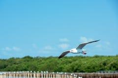 Летание чайки на небе стоковое изображение