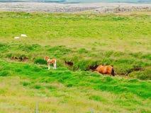 Лето Исландии стоковая фотография rf