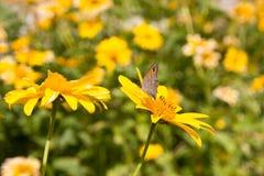 Лето цветет цветения стоцвета на луге стоковое изображение rf