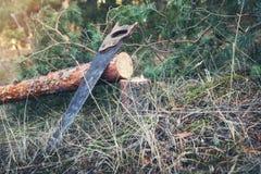 Лесохозяйство - валить сосна и ручная пила в лесе стоковые изображения rf