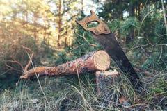 Лесохозяйство - валить сосна и ручная пила в древесинах стоковое изображение rf