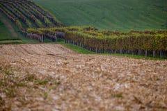 Линия сжатых полей и виноградников в Моравии стоковое фото rf