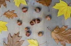 Листья и жолуди осени желтые на предпосылке 4 дерева стоковые изображения