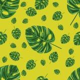 листья тропические иллюстрация вектора
