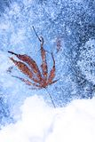 Лист и пузыри, который замерли в льде