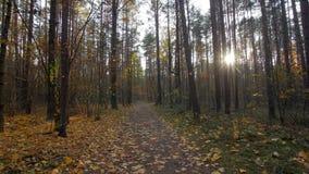 Личная перспектива идти на путь в лесе, устойчивая съемка кулачка видеоматериал