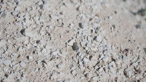 Лягушка скача на сухую скалистую почву Красивая живая природа засуха пустыня акции видеоматериалы