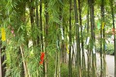 Люди путешественников присоединиться и пишущ желания на бумаге и вид на бамбуковом дереве в фестивале Tanabata или звезды японско стоковое изображение