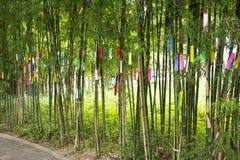 Люди путешественников присоединиться и пишущ желания на бумаге и вид на бамбуковом дереве в фестивале Tanabata или звезды японско стоковая фотография rf