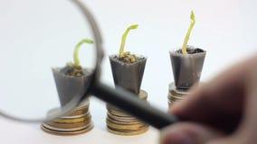 Лупа смотря 3 небольших зеленого растения растя на золотых монетках, дереве денег, финансовом росте дела видеоматериал