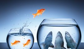 Ловушка акулы - концепция делового риска стоковое фото