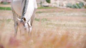 лошади поля акции видеоматериалы