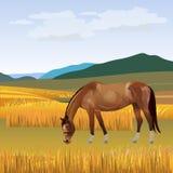 Лошадь пася вектор бесплатная иллюстрация