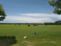 Лошадь против зеленого цвета стоковая фотография