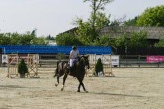 Лошадь скачет на состязание equitation стоковая фотография