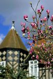 Магнолия зацветая весной стоковые изображения
