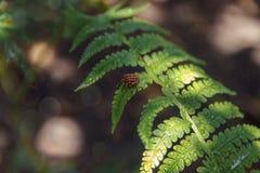 макрос, роса жука, bokeh, пылинки пыли стоковые фото