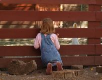 Маленькая девочка рассматривает загородка на белой гусыне стоковые фотографии rf