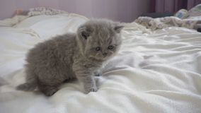 Маленькие прогулки котенка сток-видео