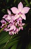 Массив орхидей пинка фламинго стоковое фото rf
