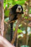 Мартышка, млекопитающее, портрет, животное, обезьяна стоковая фотография