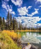 Мелкое озеро с вечнозелеными елями стоковые фотографии rf