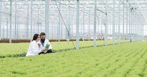 Метод гидропоники расти салат в парнике 2 ассистента лаборатории с планшетом рассматривают государство заводов и анализируют акции видеоматериалы