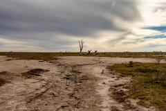 Мертвые деревья в получившемся отказ городе Epecuen Поток который разрушил город Запустелый городской ландшафт покинутый берег мо стоковые изображения rf