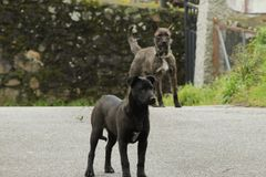Милые черные и серые собаки стоковая фотография rf