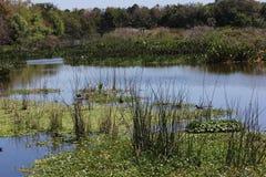 Мирная сцена обозревая болото земли воды стоковое фото