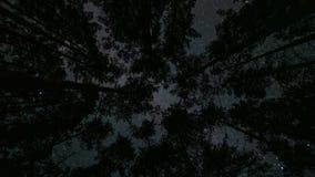 Млечный путь над верхними частями деревьев Timelapse сток-видео