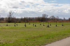 Много молодых деревьев растут в Forest Park в Frankenthal Германии стоковые изображения rf