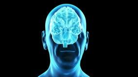 Мозг старых manиллюстрация вектора