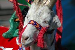 Молодая коза, в национальных одеждах стоковое фото rf