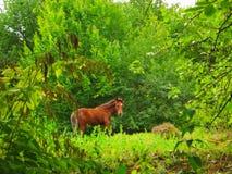 Молодая лошадь пасет в лесе летом стоковое фото rf