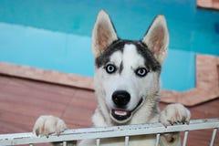 Моя красивая собака оценки в большем счастье стоковые фотографии rf