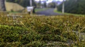 Мох, лишайник и трава растя обильно стоковые фотографии rf