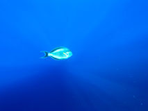 Море stock images