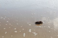 Морская водоросль на песочном дне стоковое изображение
