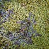 Морозные мох и листья на холодном утре зимы стоковая фотография