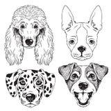 Набор 4 карандашных рисунков dog' s смотрит на иллюстрация вектора