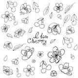 Набор деталей Цветки, листья и ягоды вишни Черный план на прозрачной предпосылке иллюстрация штока