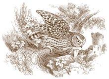 Наг-footed nudipes scotophilus сыча ночи сидя на ветви иллюстрация вектора