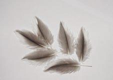 натуральные перья дикой цапли серой. Natural feathers herons gray of wild nature Stock Photography