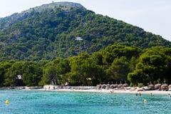 на переднем плане пляж и немедленно начинает сосновый лес стоковая фотография rf