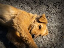 Небольшая получившаяся отказ собака на дороге стоковые изображения rf